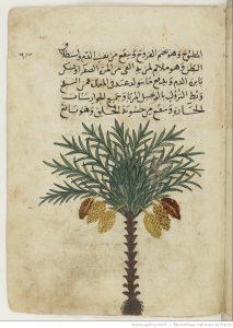 ibn-fadl-allah-al-umari-an-nakhl-illustration