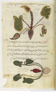 mm-arabe1