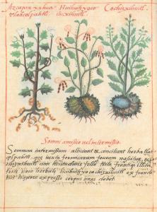 page-codex-badianus2