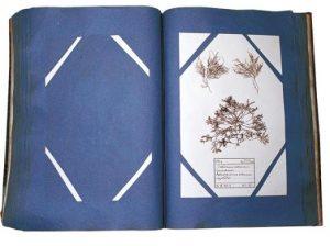 Pages d'un volume de l'alguier du Dresnay. (Abbaye de Landévennec)