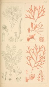manual-of-british-marine-algae