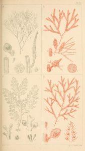 manual-of-british-marine-algae